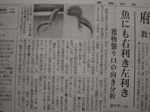 120107sankeisinbun_sakana
